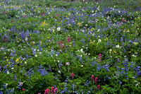 Alpine wildflowers, Mount Rainier National Park