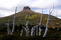 Mount Pelion East and pencil pines, Cradle Mountain-Lake St. Clair National Park